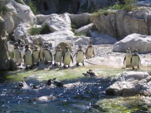 Вена. Зоопарк.