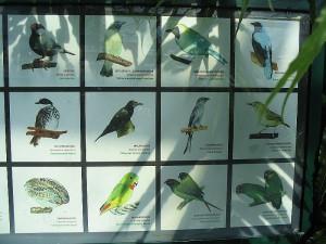 Венский зоопарк. Rain Forest. Птицы.
