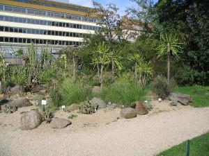 Вена. Ботанический сад.