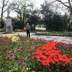 Городской парк Вены. Тюльпаны.